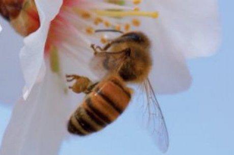 les produits de la ruche : le pollen